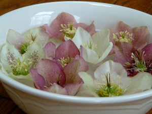 Hellebore flowers floating in a bowl