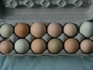 Eggs from Brightwood Vineyard Farm